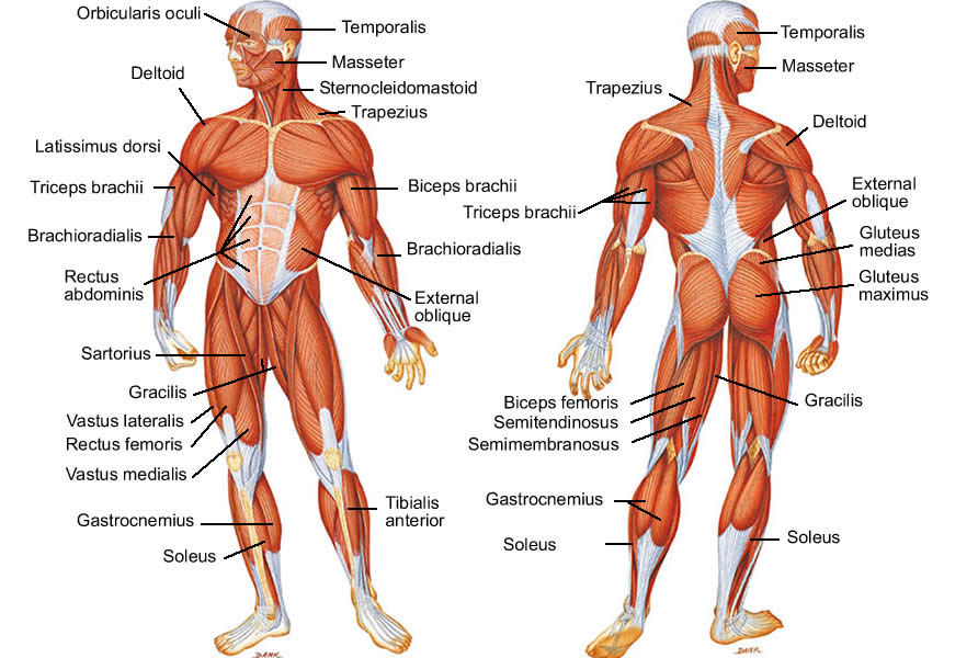 acupuncture and chinese medicine for musculoskeletal issues